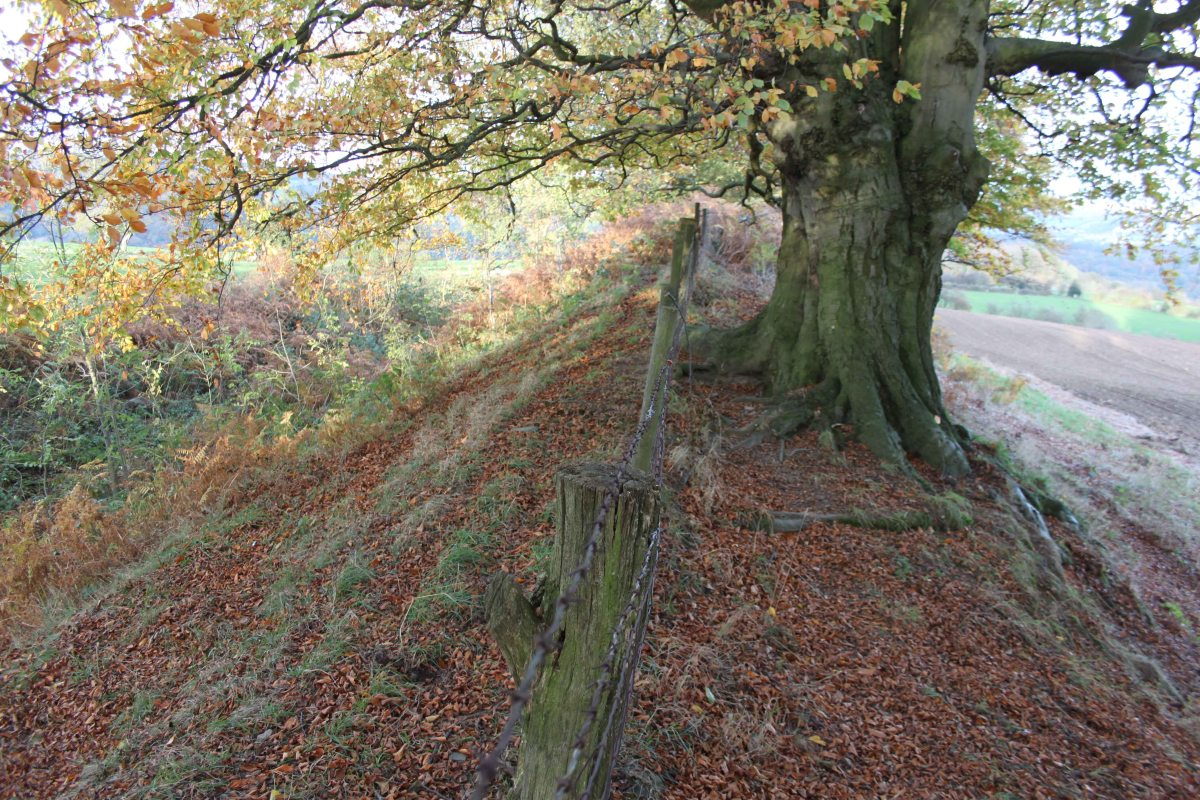 Offa's Dyke south of Bronygarth